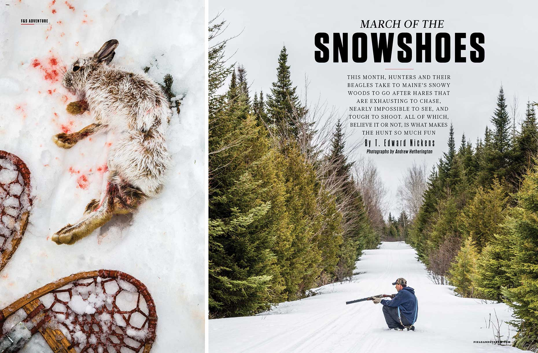 WEB_FS_SnowshowHare_Page_1.jpg